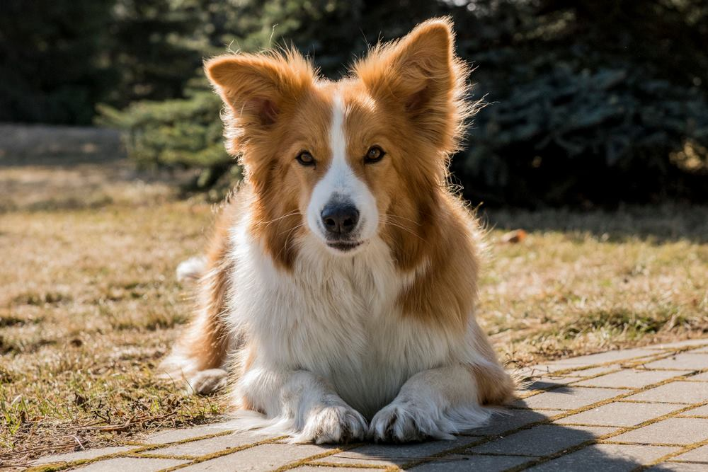Ładny pies