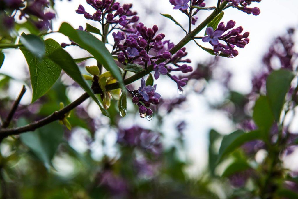Ładny kwiat