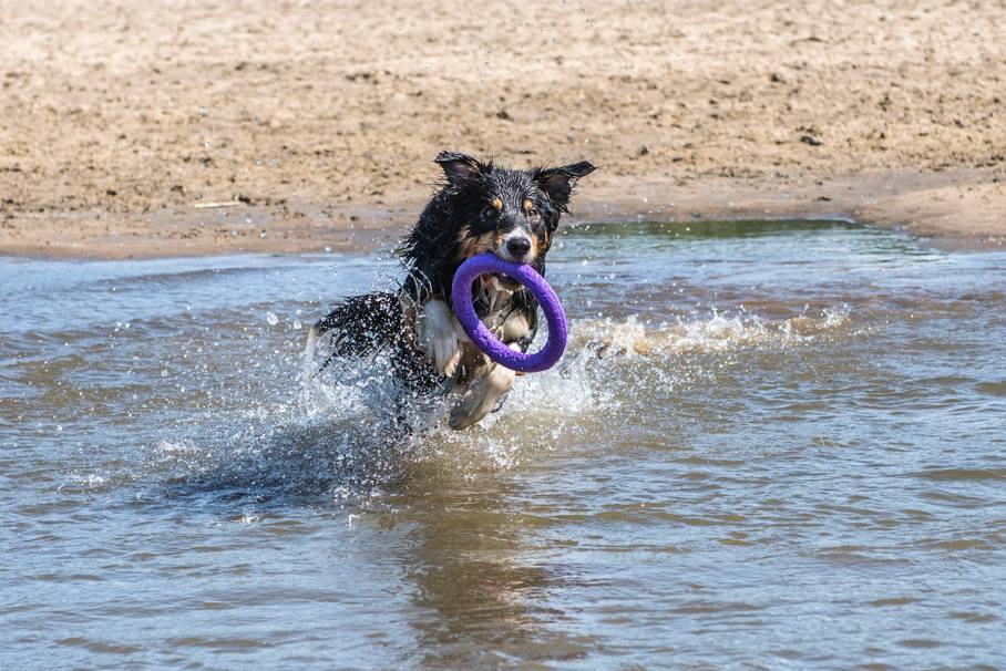 Pies biegnący w wodzie
